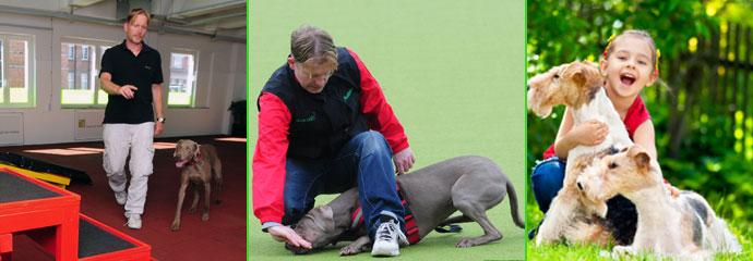 Einzeltraining Hund