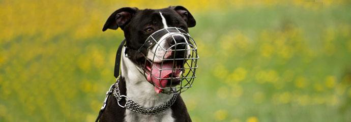 Hund Gutachten