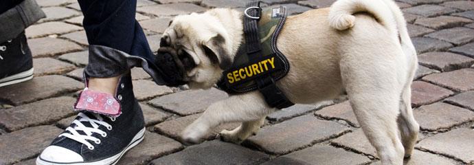 Hund - Angsttherapie
