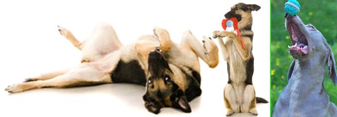 Indoor Hundeschule